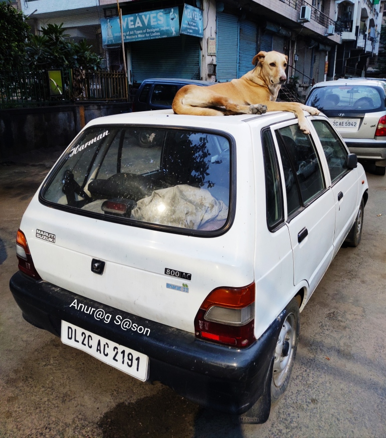 Coronavirus, dog, Anurag Sason, car